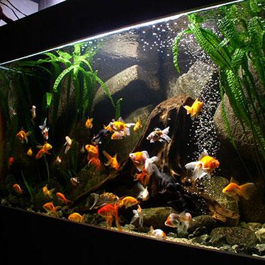Магазини за аквариуми