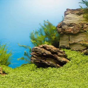 Фонове за аквариуми